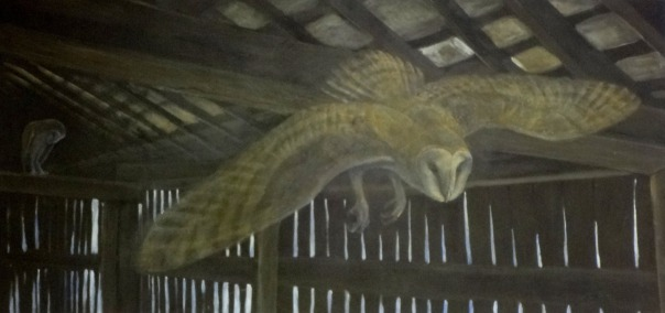 Barn Owl by Doug Pifer